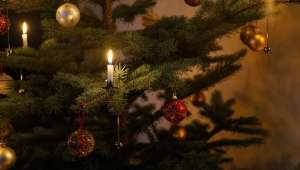 butterwick-events-tree-2020-1000px